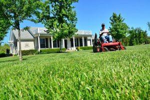 lawn-care-643556_640